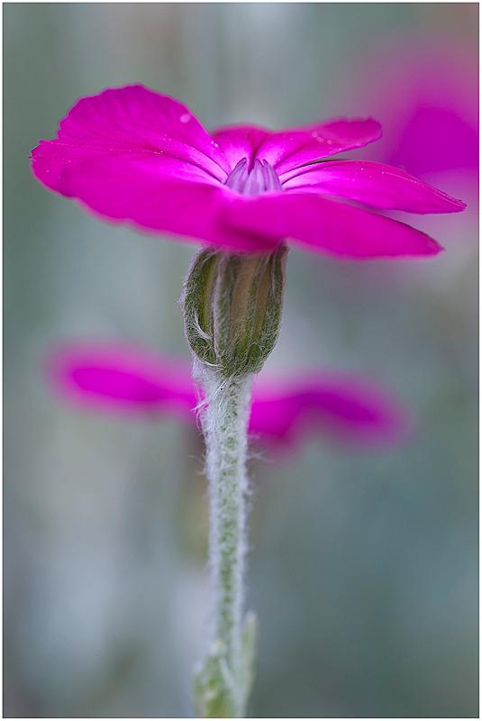 nicht pink nicht lila