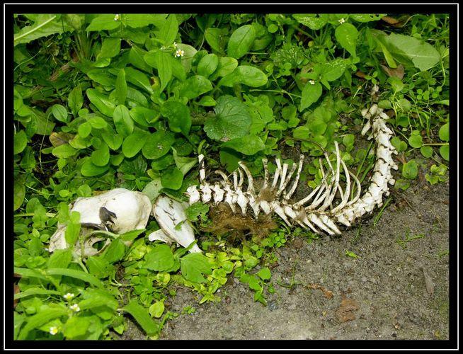 Nichts ist gewisser als der Tod, nichts ungewisser als seine Stunde. - Anselm von Canterbury