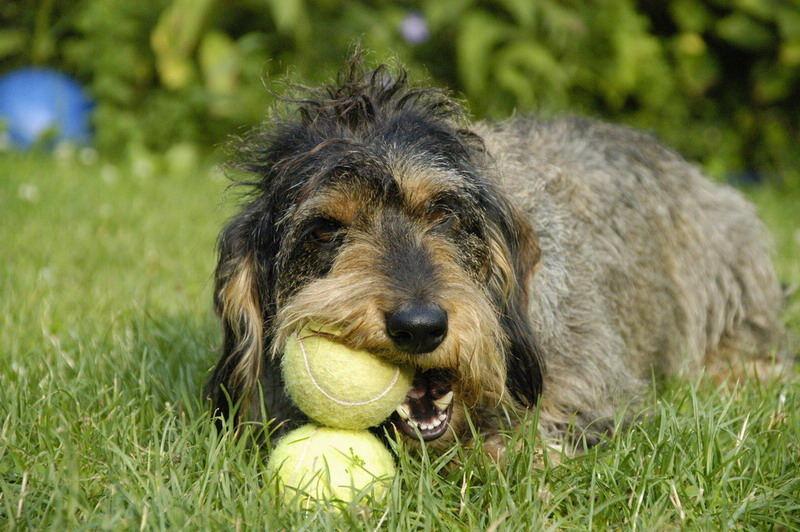 Nicky mit Tennisball 3