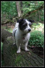 Nico auf Baumstamm