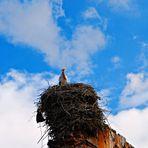 nido di cicogna sulle vecchie mura