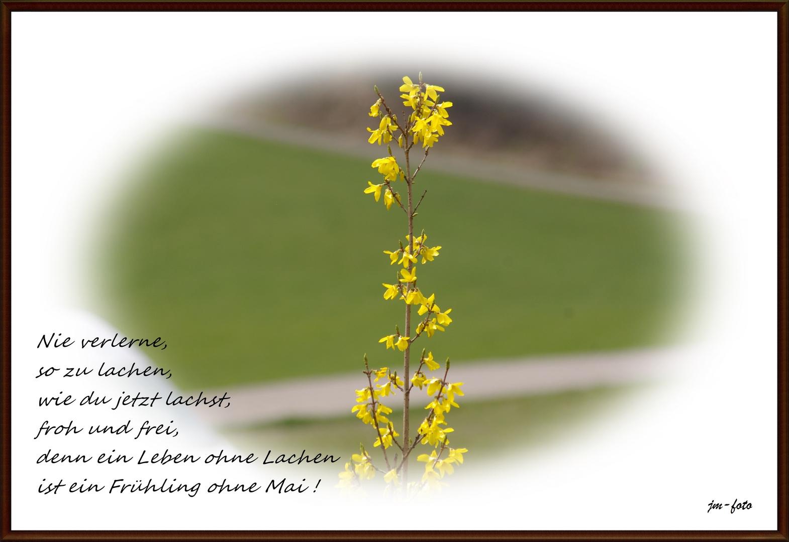 Nie Verlerne So Zu Lachen Foto Bild Gratulation Und Feiertage Wunsche Allgemein Spruch Und Bilder Bilder Auf Fotocommunity
