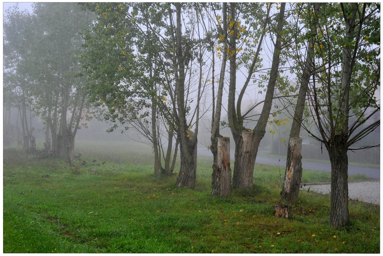Niebla de la mañana (Morgennebel)