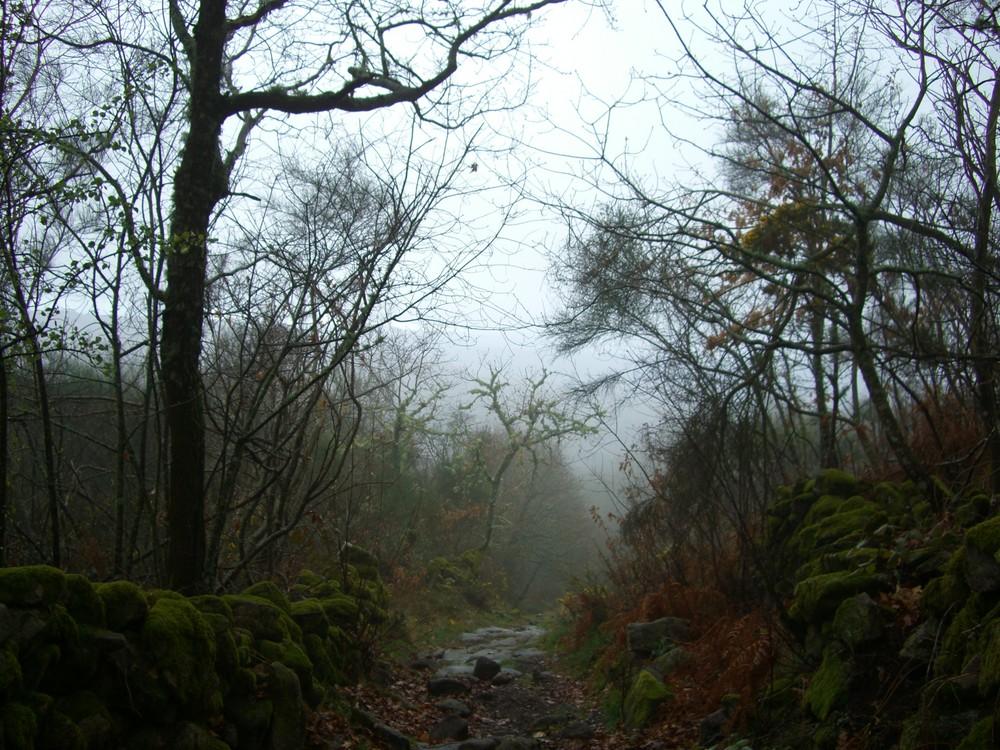 Niebla de Montaña