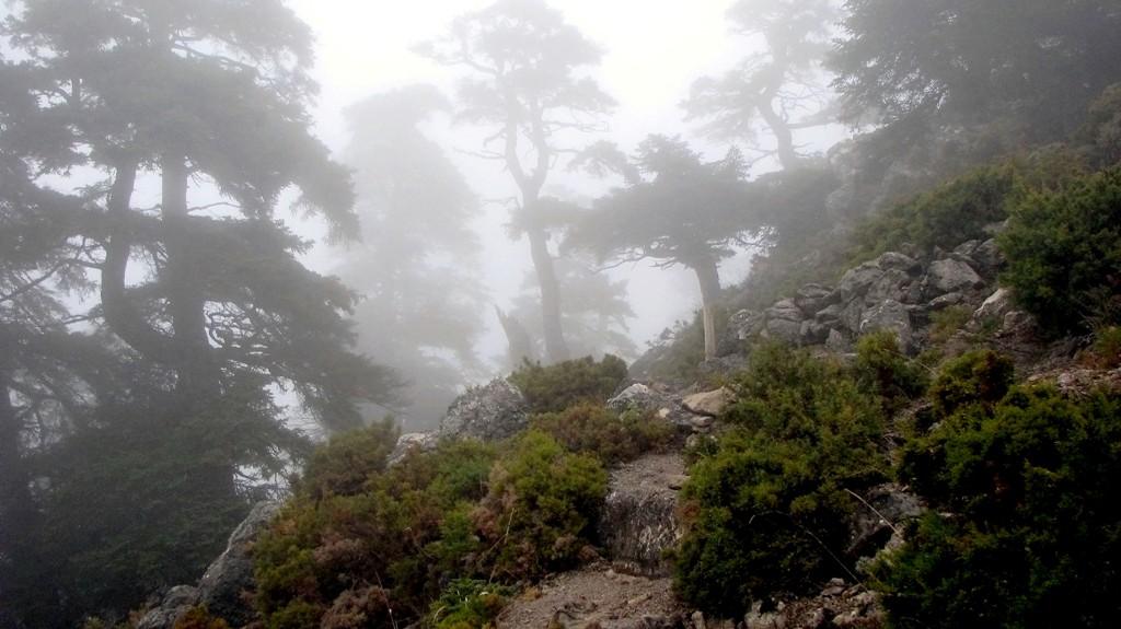 Niebla en la Cañada de las Ánimas