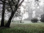 Niebla en la mañana