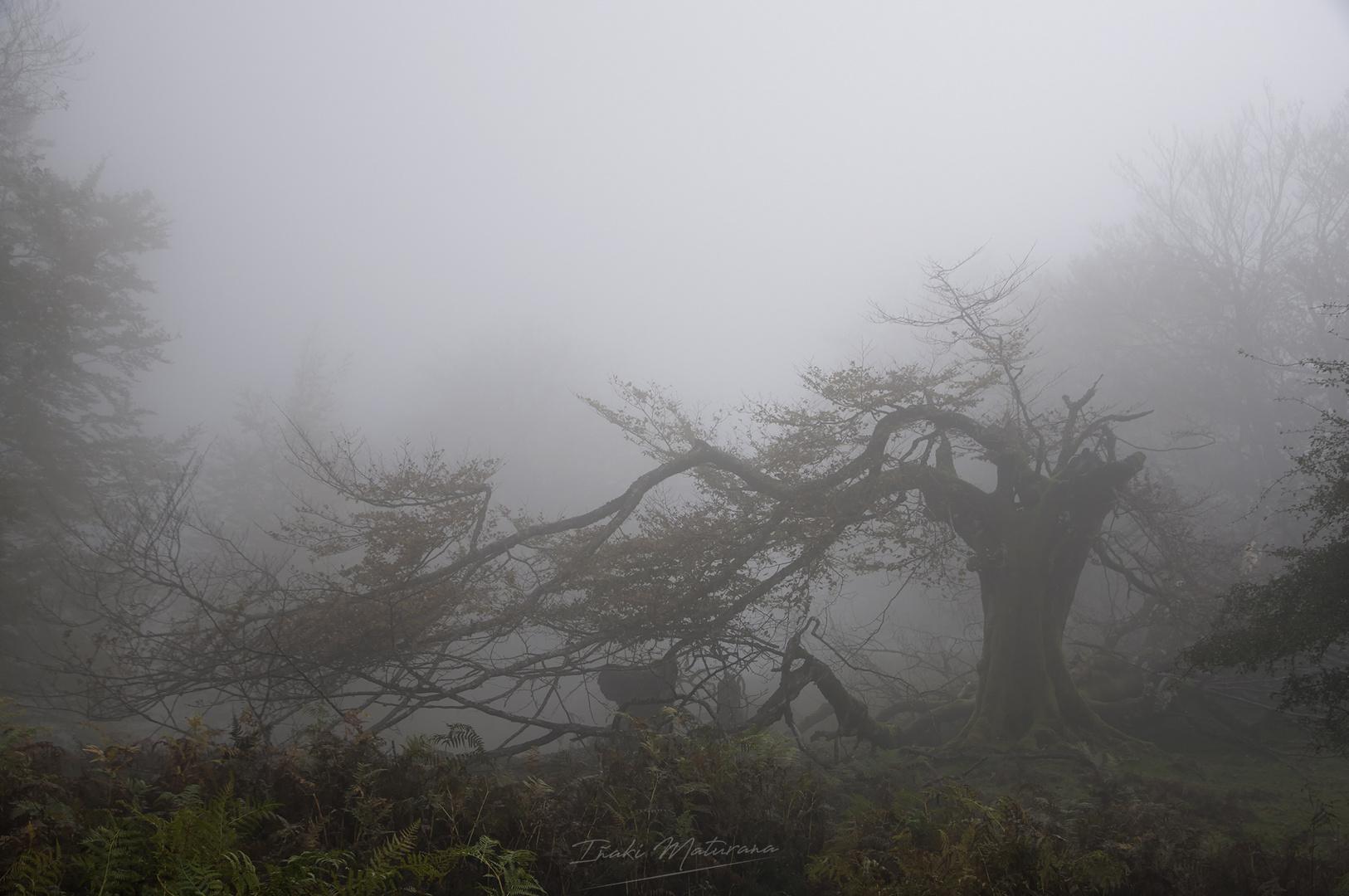 Niebla (fog)
