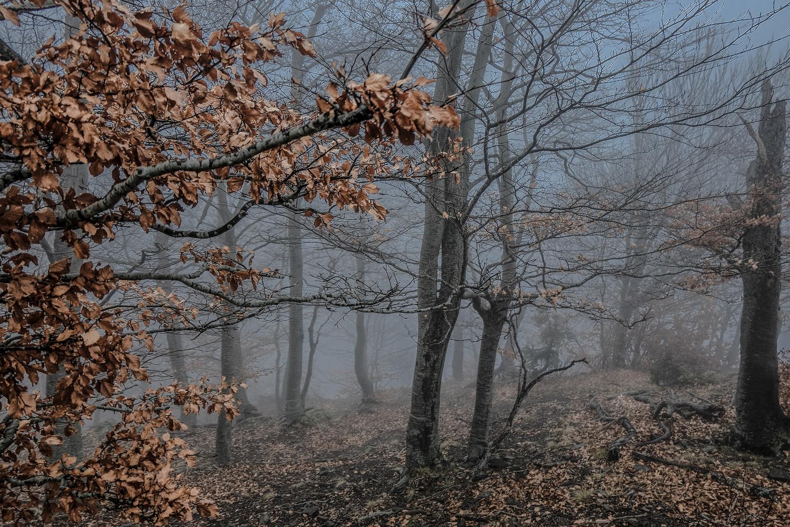 Niebla I