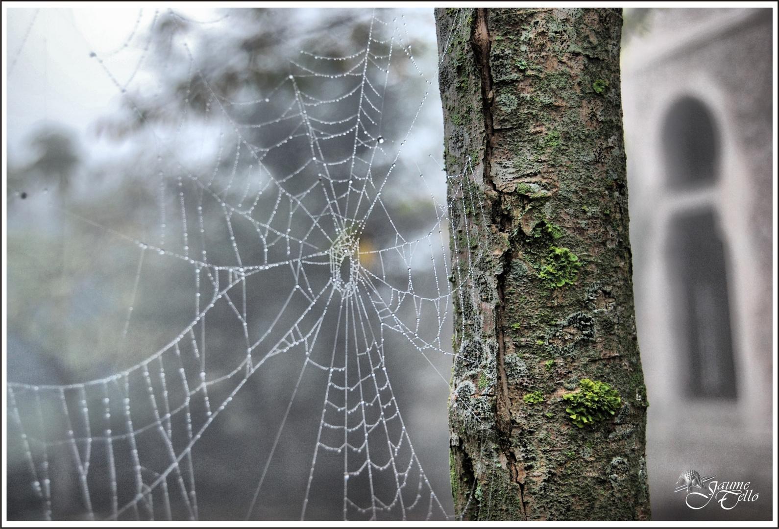 Niebla y lluvia, araña ausente