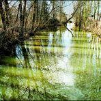 Niederdorfelden Mühlgraben