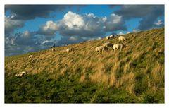 Niederländische Wolllieferanten auf dem Lancasterdijk
