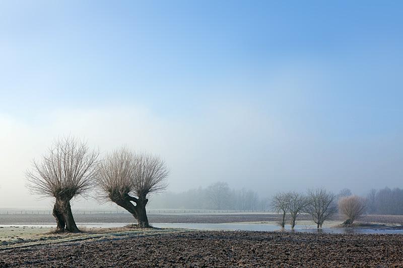 Niederrhein Landschaft - Tagesanbruch auf der Bislicher Insel