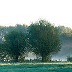Niederrhein - Landschaftsfoto | Morgenspaziergang im Frühnebel