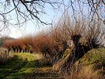 Niederrhein - Weiden-Allee