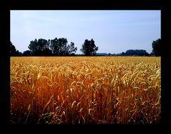 Niederrheinisches Getreide