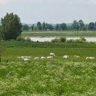 Niederrheinromantik