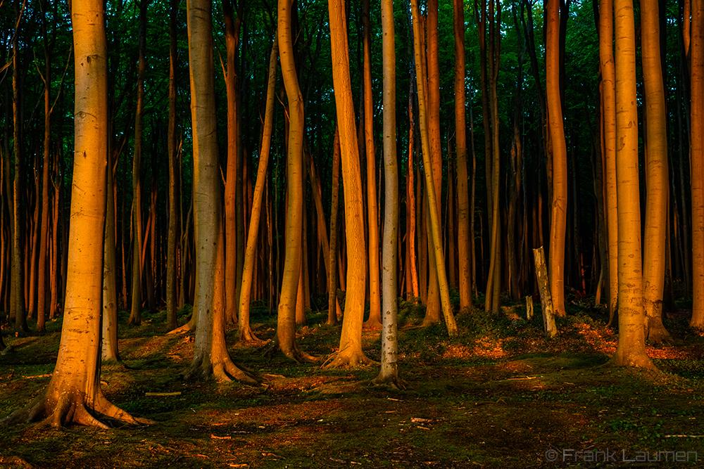 """Nienhagen sogenannter """"Gespensterwald"""""""