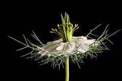Diverse Blüten