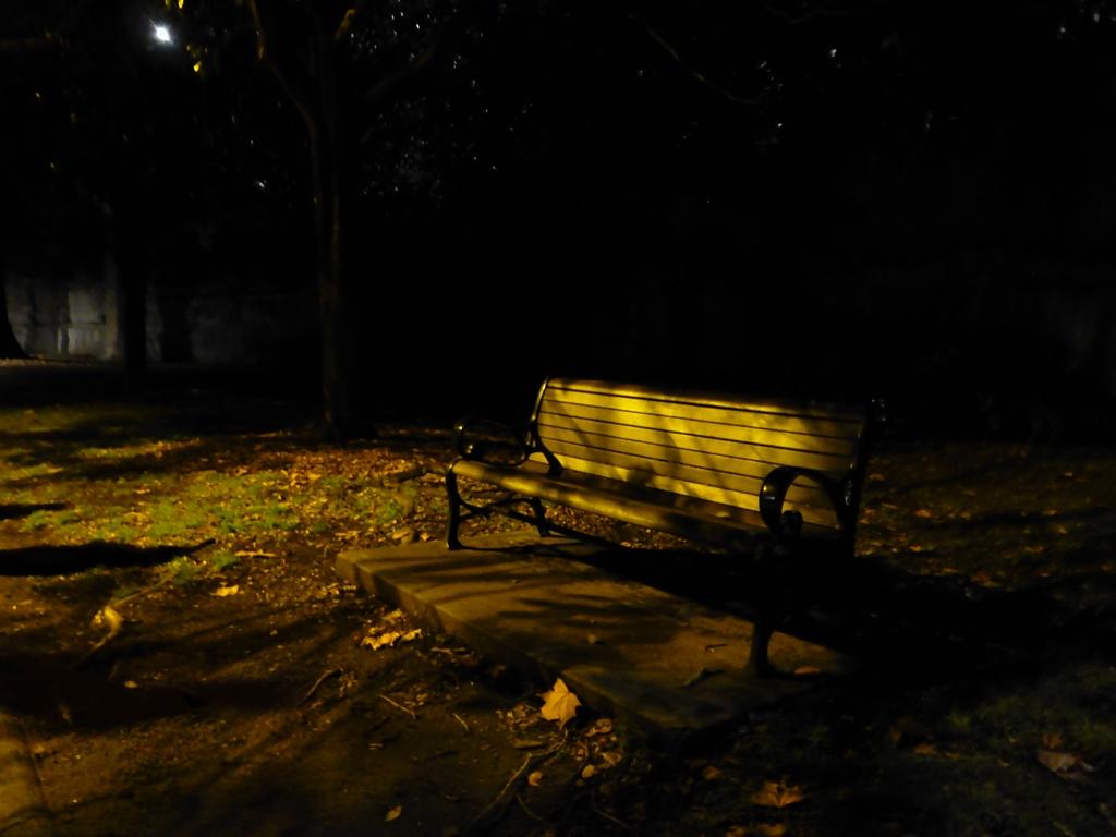 Night Oasis