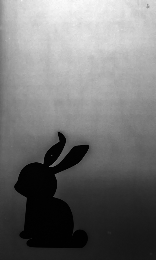 night rabbit