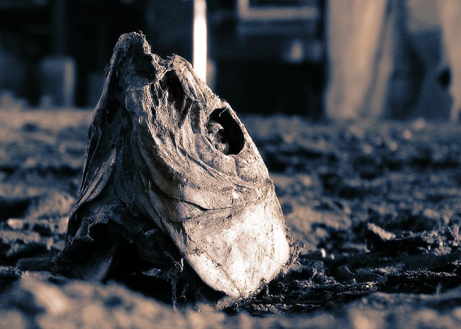 nightmare of the picker fish