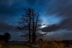 Night:Tree