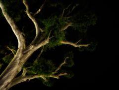 night.tree.whispering