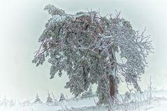Nikolaus Winter
