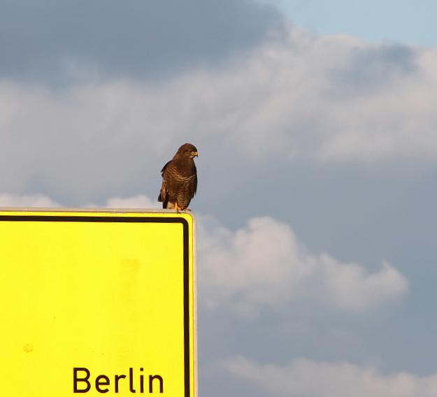 Nimmt mich einer mit oder muss ich selbst nach Berlin fliegen