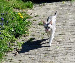 Nini auf dem Spaziergang