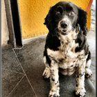 Nini , una bella cagnolina