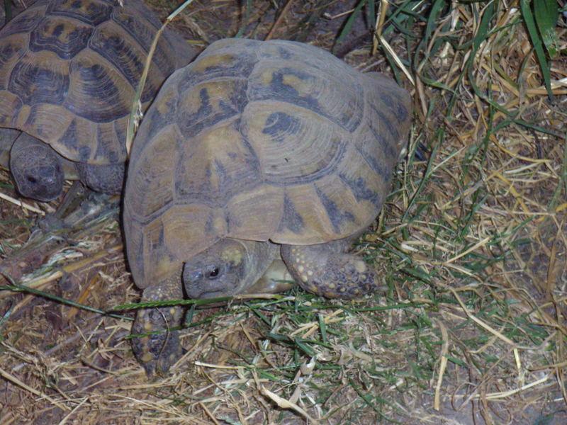 Ninja Turtle on the way @ home