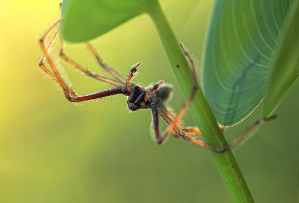 nix für Arachnophobiker