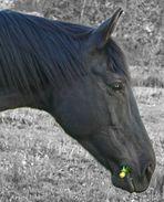 Nixe - Zweitärmstes Pferd der Welt