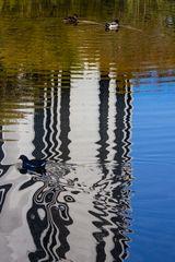 No Duck in a Row