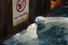 No Fishing #4