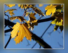 No leaf