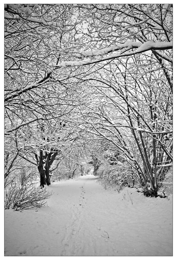 No more Schnee