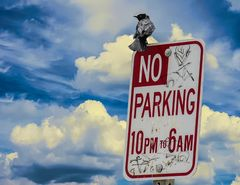 No Parking                             DSC_4319-2