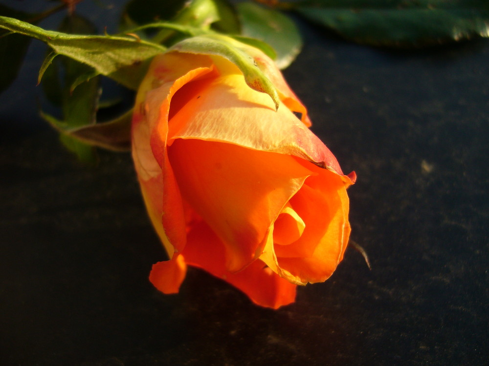 No time for Roses :)!