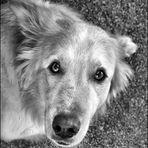 """""""No todo perro tiene suerte...............:-("""""""