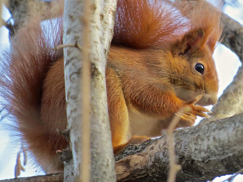 Noch 3 Tage bis Weihnachten Foto & Bild | tiere, wildlife ...