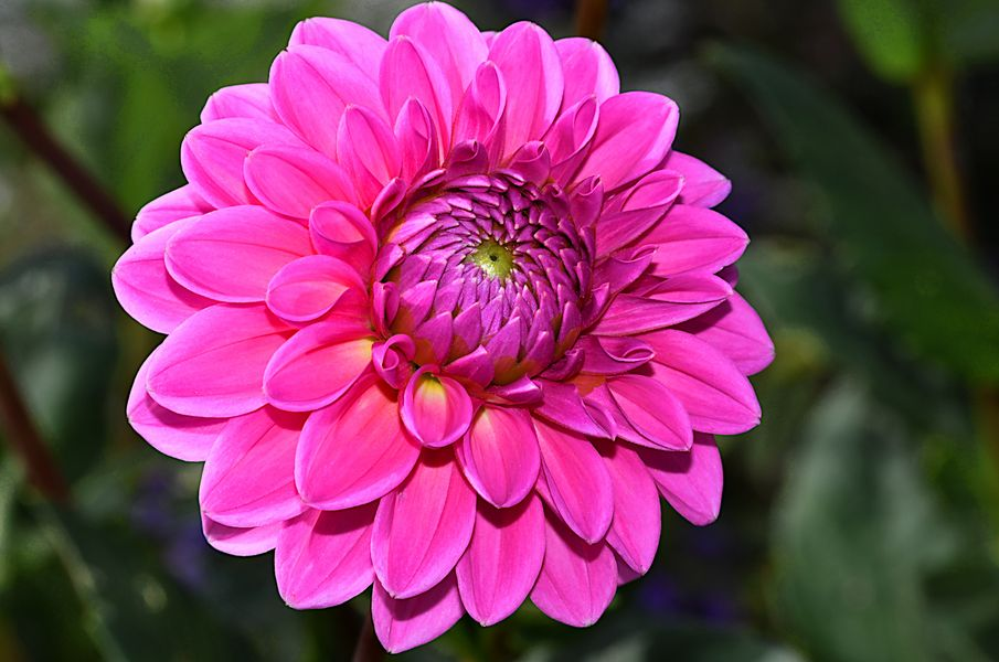 Noch blühen diese Schönheiten ...