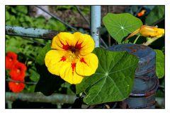 Noch blühen einige Blumen, nur wie lange noch?