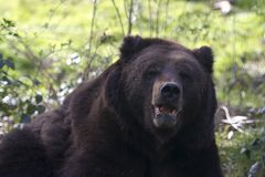Noch ein Bär...