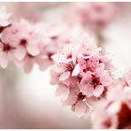 noch ein bißchen Frühling...