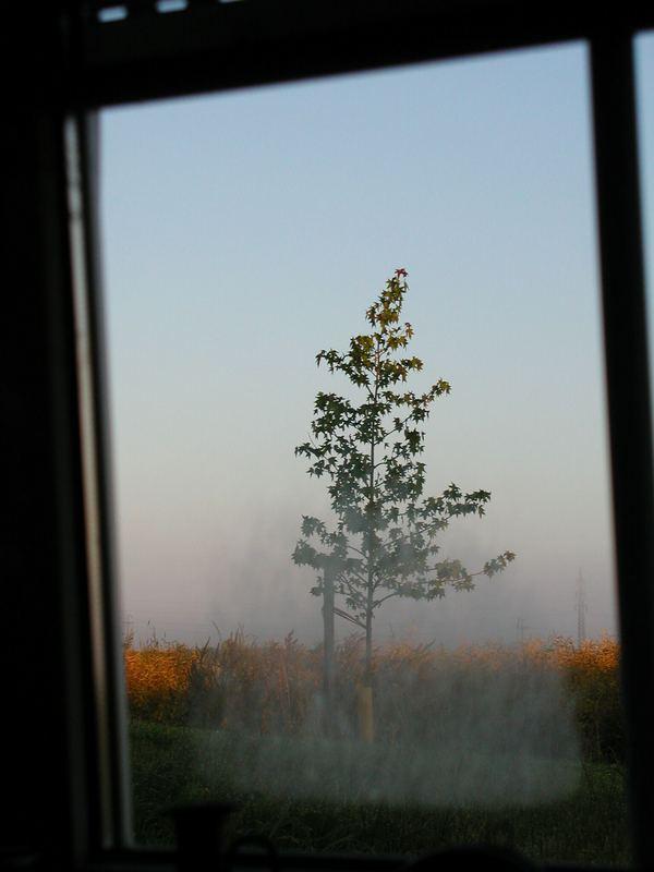 noch ein Blick aus dem Küchenfenster...