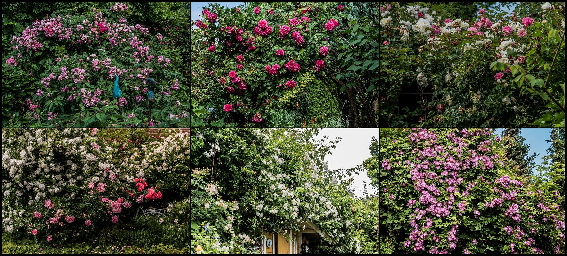 Noch ein Blick in unseren Garten - 4. Juni 2018