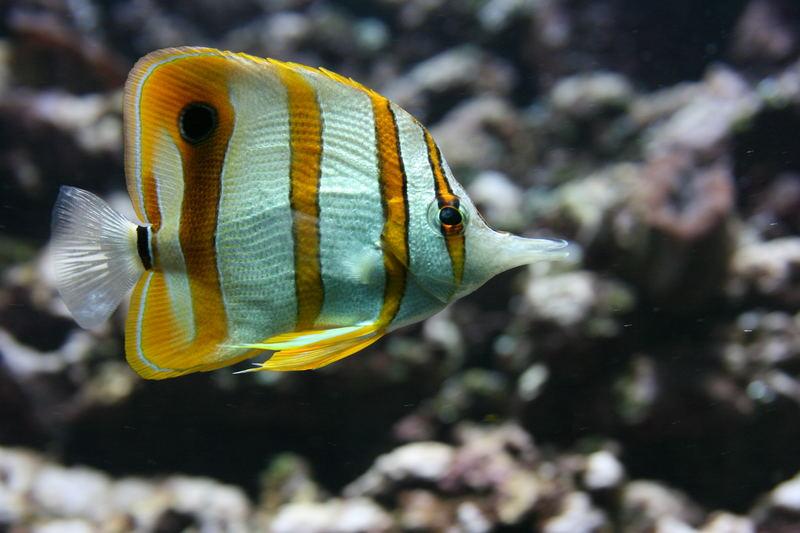 Noch ein Fisch