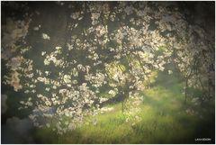 Noch ein Frühlingstraum